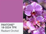 A bright orchid requires little care for a lot of wow factor.